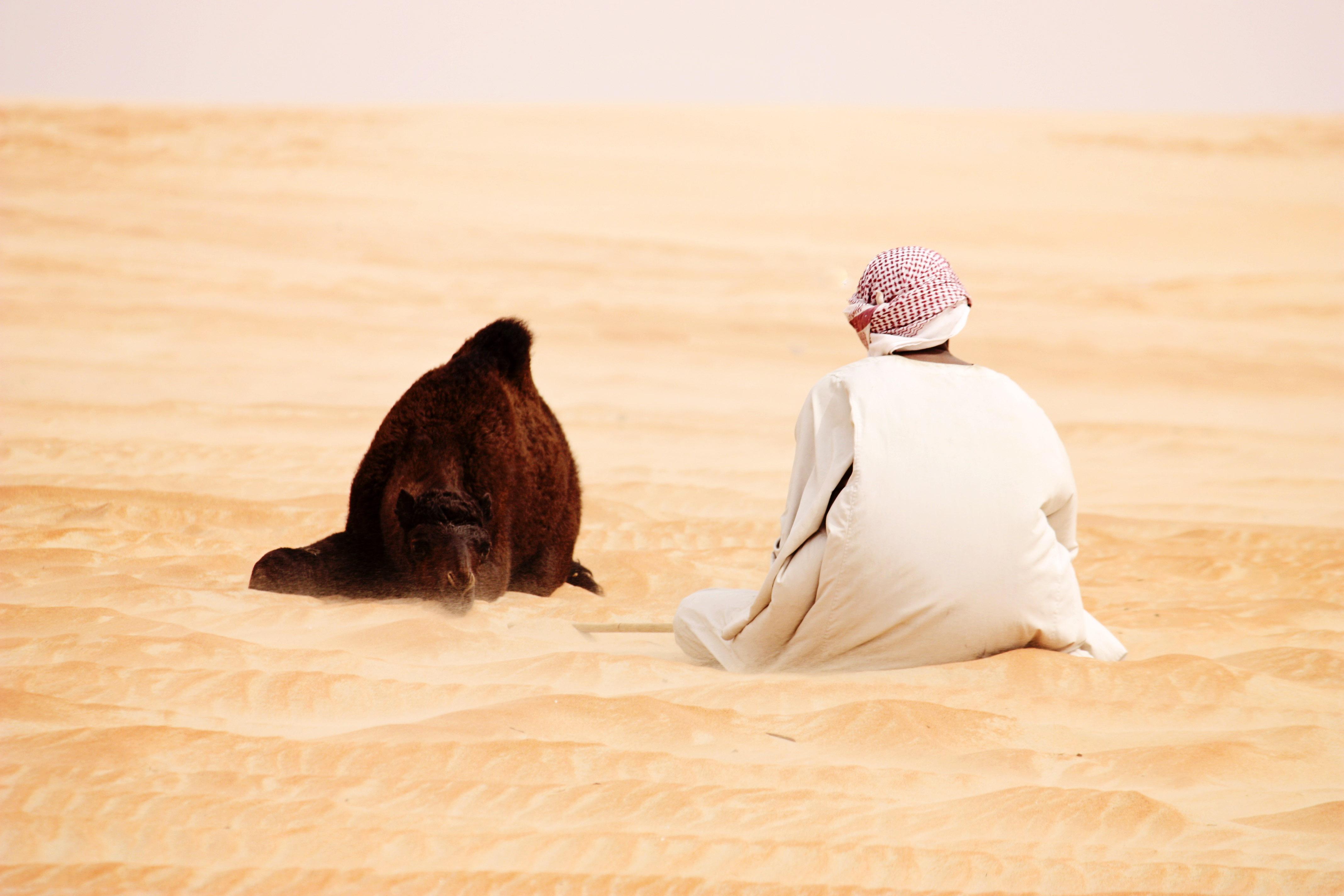 8 урока за успешни продажби на … камили