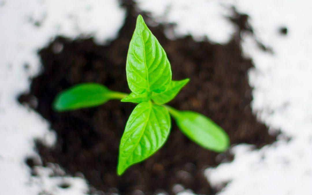 5 компании с интересни CSR инициативи в България